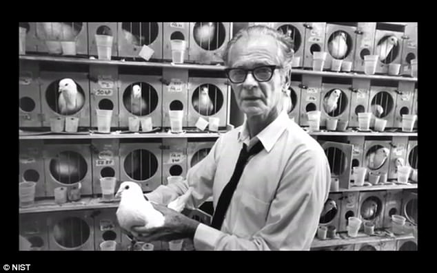 When NSIT developed a glider that could carry a 1,000-pound bomb, it needed a new type of guidance system that could ensure safety and accuracy. At that point, B.F Skinner (pictured) proposed using pigeons